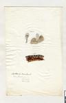 Arthonia by Charles J. Sprague