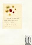 Asteroma by Charles J. Sprague